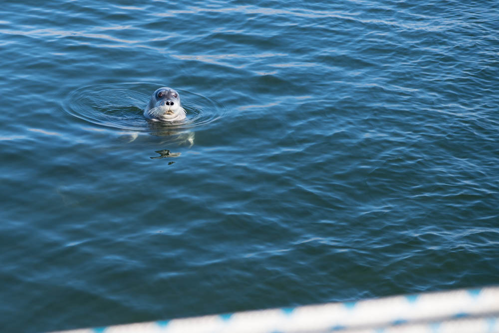 A seal comes to say hello