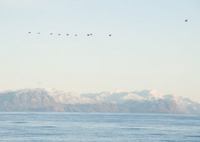 greenland-coast-and-geese-about-n66d-50-w054d-10-21-09