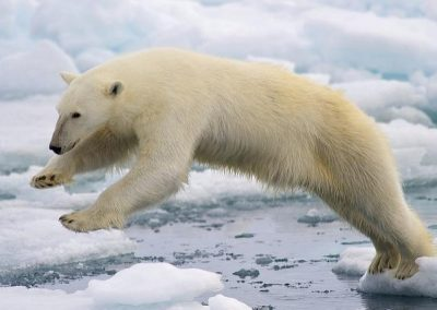 Animals of the Arctic