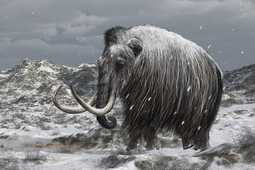 Could bringing back mammoths help reduce carbon emissions in the Arctic??